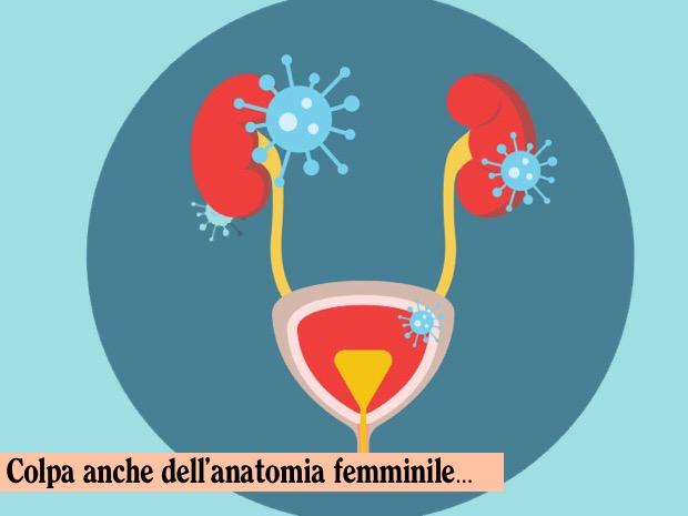 uretra femminile
